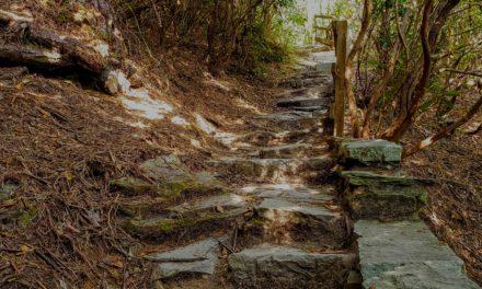 The Road Taken… By Tim Tron