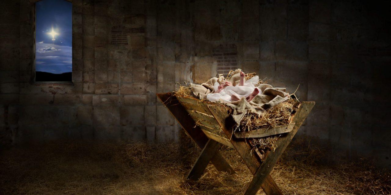 Savior Like A Chicken Under The Tree | Steve Bietz