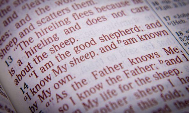 The Good Shepherd | Tracy Jessup