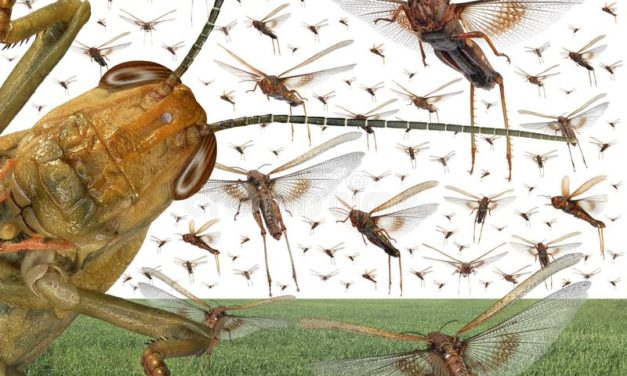 An Insect that Is Used as a Plague?   Christy Lowman