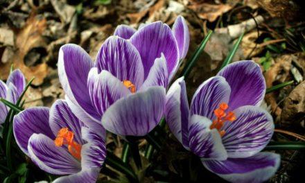 Forgiveness…A Sweet Fragrance | Ken and Jan Merop