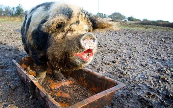 Socialism:  Lipstick on a Pig | Dr. Mark H. Creech