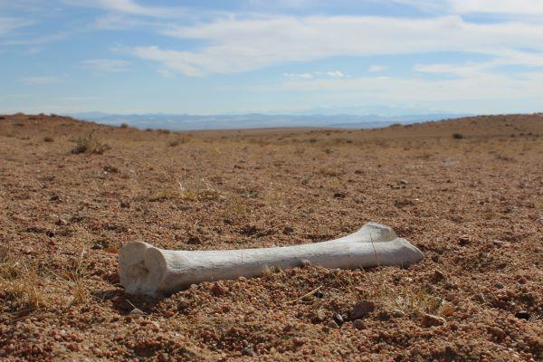 How Dry the Bones?