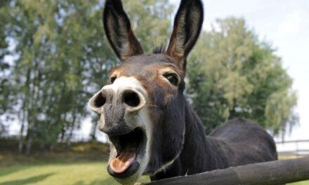 Don't Be Like a Donkey