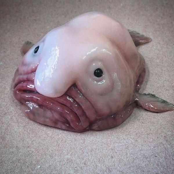 The Grandpa Fish