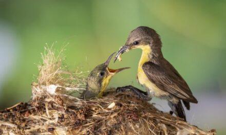 A Bird's Nest and God's Will