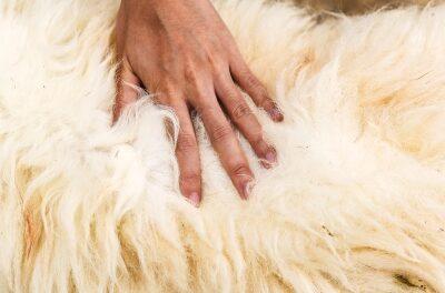 Gideon's Fleece | Dennis Love